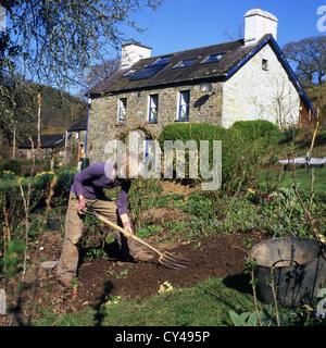 Une femme mature senior la récolte de son jardin en pente au printemps et à l'avis de pays accueil en mars soleil Banque D'Images