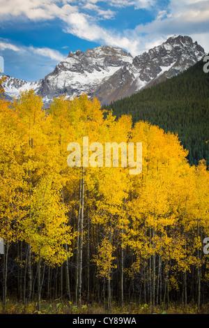 Les trembles grove dans les montagnes de San Juan au Colorado Banque D'Images