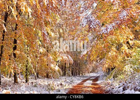 L'Allemagne, l'Odenwald: première neige Banque D'Images