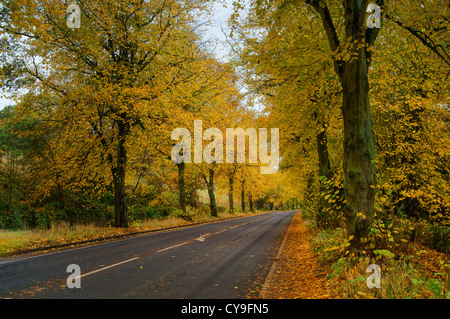 A57 Road & Woodland en automne,Vallée Rivelin,Sheffield,South Yorkshire Banque D'Images