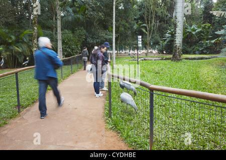 Les gens du Parque das Aves (Parc des Oiseaux), Iguacu, Parana, Brésil Banque D'Images