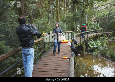 Les personnes prenant photo de toucans à Parque das Aves (Parc des Oiseaux), Iguacu, Parana, Brésil Banque D'Images