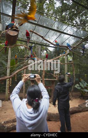 Les personnes qui prennent des photos de perroquets perroquet à l'intérieur de l'enceinte Parque das Aves (Parc Banque D'Images