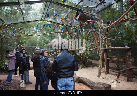 Les gens à l'intérieur de l'enceinte parrot à Parque das Aves (Parc des Oiseaux), Iguacu, Parana, Brésil Banque D'Images