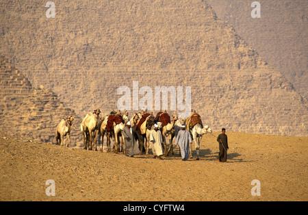 L'Egypte, à Gizeh, près du Caire, chameliers en face des pyramides. Banque D'Images