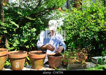 Les plantes en pot dans la cour de l'homme