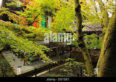 Érable dans un temple le long du chemin des philosophes, Kyoto, Japon Banque D'Images