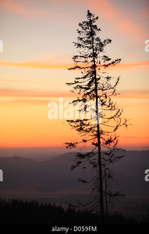 Silhouette d'arbre de pin dans la région de montagnes Tatras Slovaquie Banque D'Images