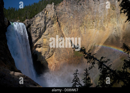 Arc-en-ciel sur Lower Falls de l'Oncle Tom's Point, Grand Canyon de la Yellowstone River, le Parc National de Yellowstone, Banque D'Images