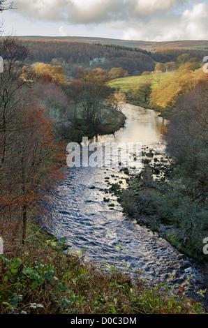 Le soir de l'automne ensoleillé vue sur rivière Wharfe méandres pittoresques, en amont de Barden Tower ruins - Bolton Banque D'Images
