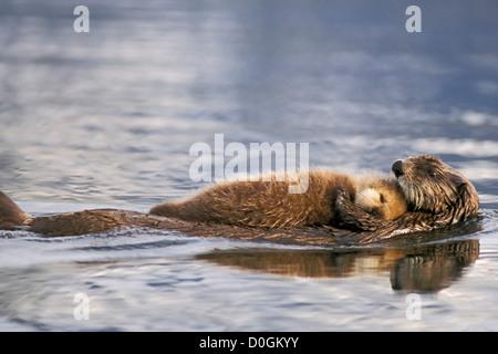 Loutre de mer flottante par nouveau-né Pup sur sa poitrine Banque D'Images