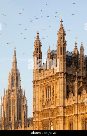 Flock of seagulls au-dessus du Palais de Westminster le matin au début du printemps. Banque D'Images