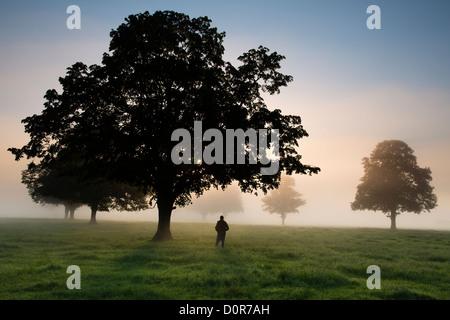 Un photographe dans une rubrique d'un matin brumeux près de Milborne Port, Somerset, England, UK Banque D'Images