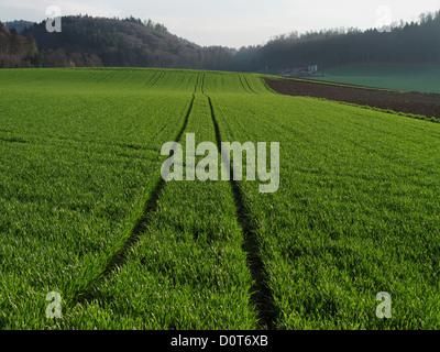 Burgdorf, champ, l'orge, le grain, le canton de Berne, le paysage, l'agriculture, de l'ensemencement, Suisse, voie, Banque D'Images