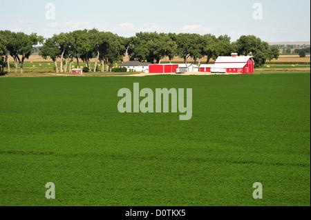 Ferme, champs, l'agriculture, Greeley, Colorado, USA, United States, Amérique, Amérique du Nord, Banque D'Images