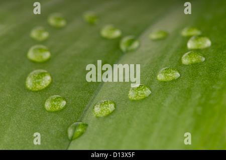 Forme de coeur gouttes de rosée sur feuille verte avec une faible profondeur de champ Banque D'Images