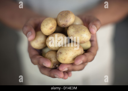 Close up of hands holding pommes Banque D'Images