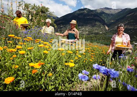 Les personnes âgées la cueillette des fleurs dans le champ