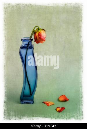 Le flétrissement rose rouge dans un vase bleu avec incrustation de texture Banque D'Images