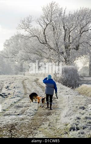 Hiver femme marchant chien sur le chemin de campagne dans le champ exercice tôt le matin pour les chiens de givre dans la campagne hedgerow Paysages Essex Angleterre Royaume-Uni