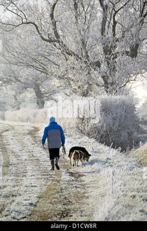 Hiver femme marchant chien sur le chemin de campagne dans le champ exercice tôt le matin pour les chiens de givre dans la campagne hedgerow Paysage Essex Angleterre Royaume-Uni