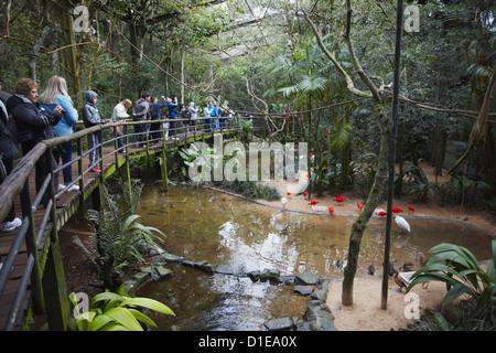 Les gens à l'intérieur de Marche-en enclos au Parque das Aves (Parc des Oiseaux), Iguacu, Parana, Brésil, Amérique Banque D'Images