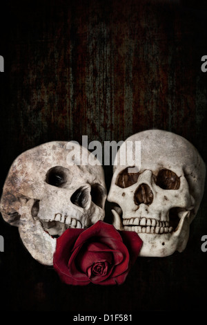 Deux crânes, combinée à tout jamais dans l'amour éternel, avec une rose rouge Banque D'Images