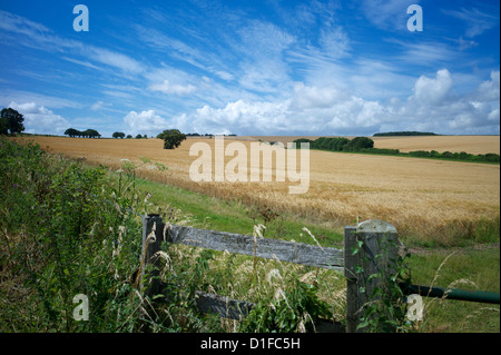 Le South Downs Way, Hampshire, Angleterre, Royaume-Uni, Europe Banque D'Images