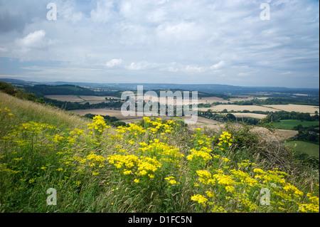 Le chemin du sud, près de South Harting, Hampshire, Angleterre, Royaume-Uni, Europe Banque D'Images