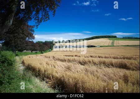 Les cultures arables par la South Downs Way, près de Buriton, Hampshire, Angleterre, Royaume-Uni, Europe Banque D'Images