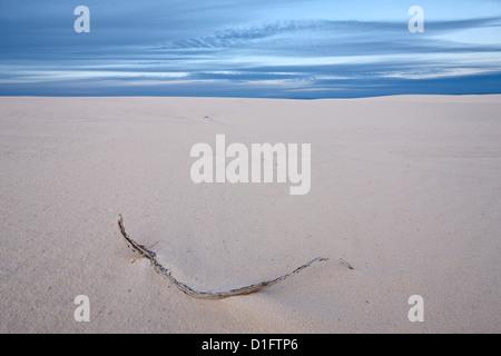 Twig sur les dunes, White Sands National Monument, Nouveau-Mexique, États-Unis d'Amérique, Amérique du Nord