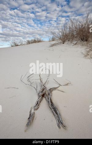 Les brindilles sur les dunes, White Sands National Monument, Nouveau-Mexique, États-Unis d'Amérique, Amérique du Nord