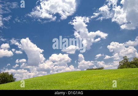 Grand ciel bleu et de nuages et l'herbe verte Banque D'Images