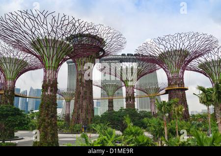 Singapour Supertree Grove dans les jardins de la baie avec le Marina Bay Sands à Singapour, l'arrière-plan Banque D'Images