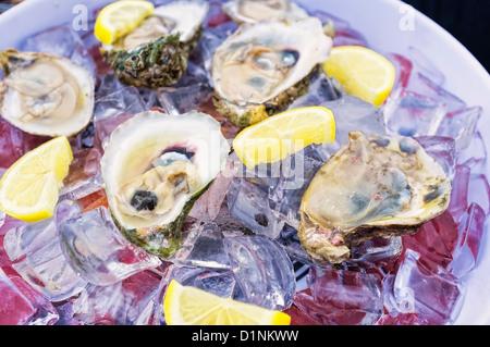 Matières premières fraîches huîtres demi-coquille de glace sur un plat, côte du golfe du Mexique, Texas, États-Unis Banque D'Images