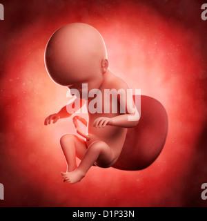 Fœtus à 26 semaines, artwork Banque D'Images