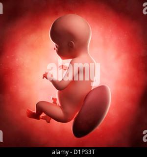 Fœtus à 28 semaines, artwork Banque D'Images