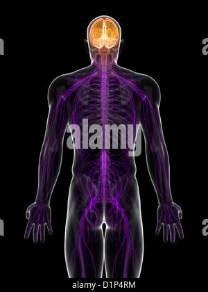 Système nerveux central, artwork Banque D'Images