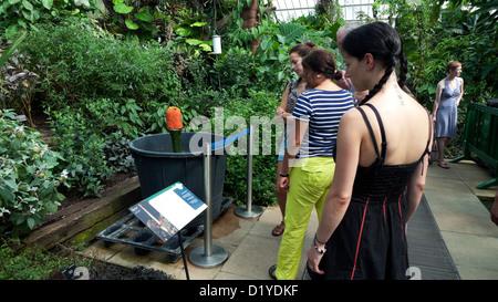 Les visiteurs à Kew Gardens l'affichage d'une plante rare dans une serre Richmond London England UK Banque D'Images
