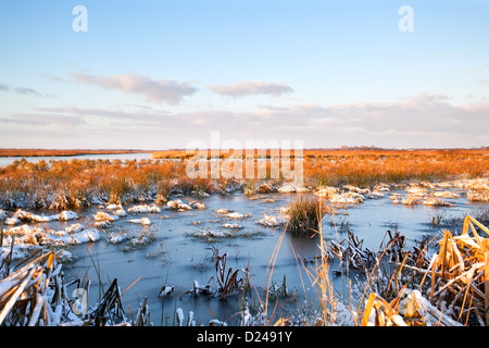 Marécage gelé durant l'hiver en Drenthe Banque D'Images