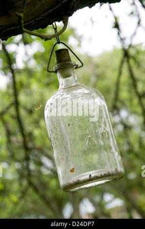 Flacon de verre ancien accroché dans jardin Banque D'Images