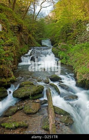 Situé au confluent de la chute d'East Lyn et Hoar Oak Eau, Watersmeet Falls, Lynmouth, North Devon, Angleterre, Banque D'Images