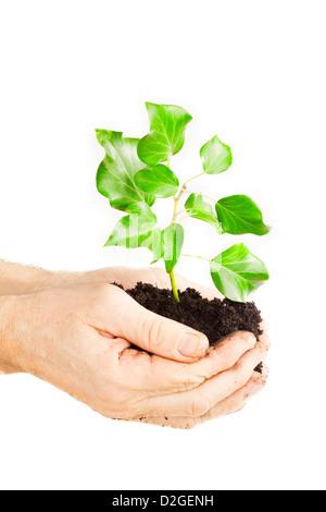 Growing green plante dans un part isolé sur fond blanc Banque D'Images