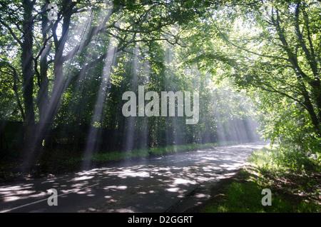 Rayons de soleil à travers des arbres sur le chemin de campagne, près de East Grinstead, Forest Row, la Forêt d'Ashdown, Banque D'Images