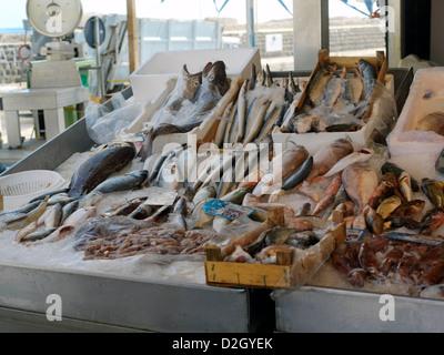 Sicile Italie Fish Market à Porticello Affichage Poissons Banque D'Images