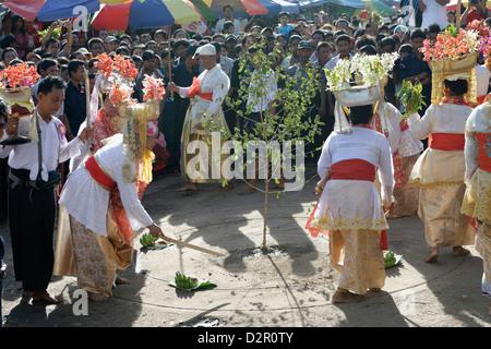 L'abattage des arbres (cérémonie htein pin) dans le plus grand festival de Nat rituel (Spiritueux) à Taungbyon, Banque D'Images