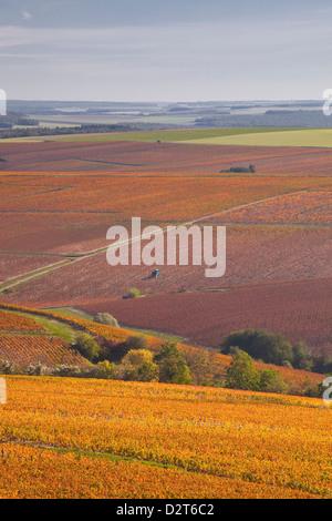 Vignobles près de Prehy en Bourgogne, France, Europe Banque D'Images