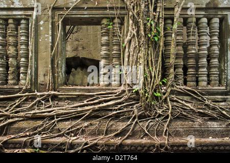 Ta Prohm Temple, Angkor, Site du patrimoine mondial de l'UNESCO, Siem Reap, Cambodge, Indochine, Asie du Sud-Est, Banque D'Images