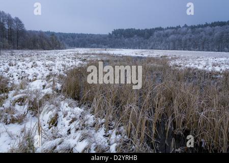 Marécage gelé recouvert de neige en hiver Banque D'Images