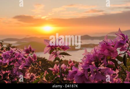 Red Flowers frame le coucher du soleil sur les îles de port de Charlotte Amalie St Thomas USVI